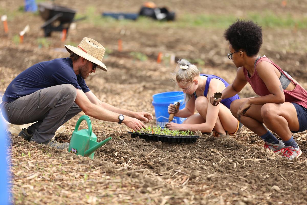 People applying mulch to soil